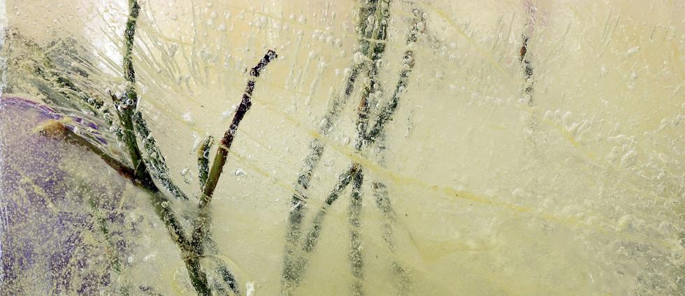 erna-lagarde-bloemen-in-het-ijs-3j