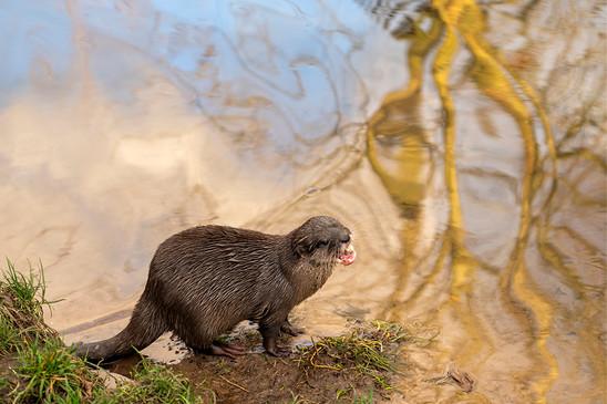 Marian Vrij - Otter.jpg