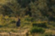 Leo-L  RX10-16834.jpg