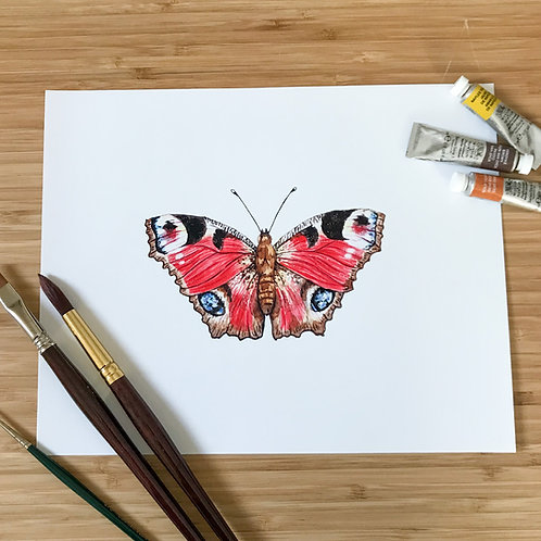 MA Peacock Butterfly Print
