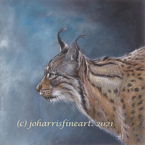 Iberian Lynx by Jo Harris