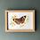 Thumbnail: MA Buckeye Butterfly Print