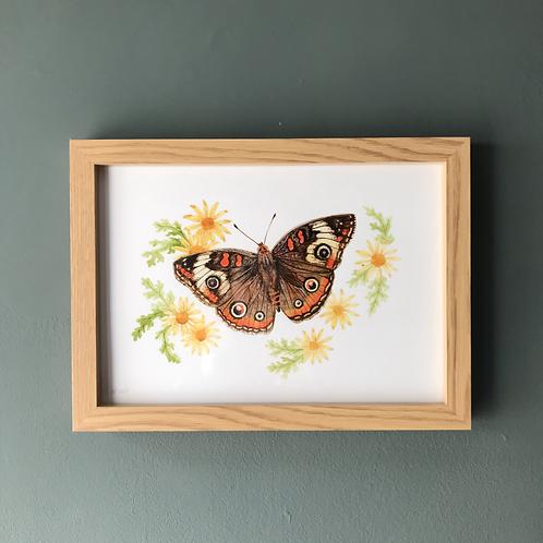 MA Buckeye Butterfly Original Watercolour