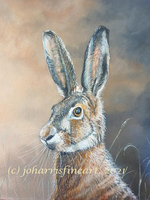 Hare by Jo Harris