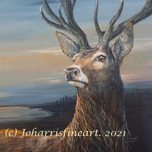 Deer at Dawn  by Jo Harris