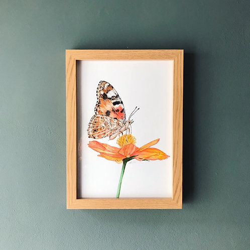 MA Painted Lady Butterfly Original