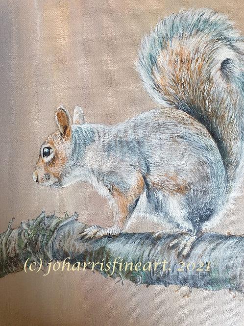 Squirrel  by Jo Harris