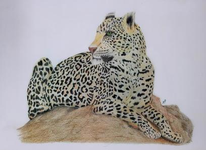 Leopard A3 Print.jpg