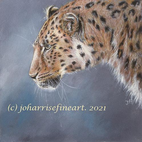 Amur Leopard by Jo Harris
