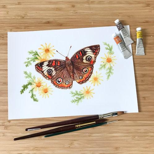 MA Buckeye Butterfly Print
