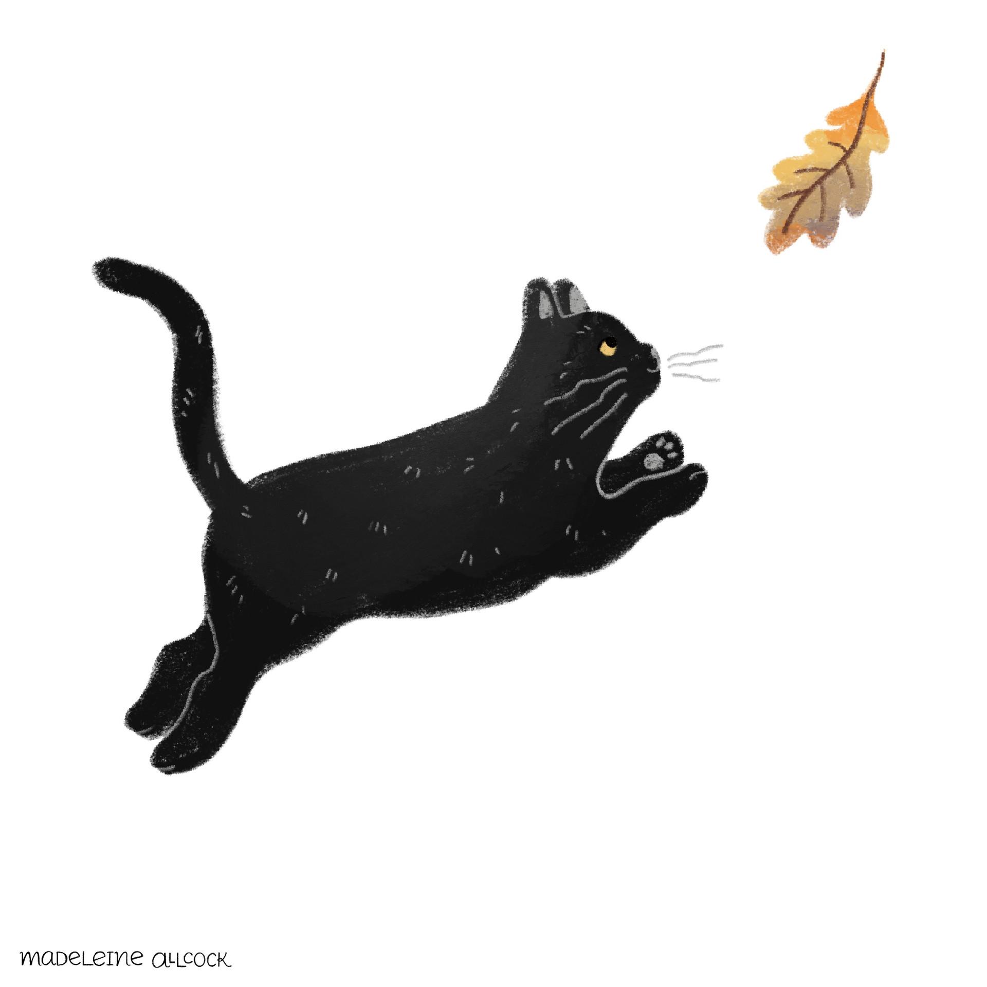 Cat_Running.JPG