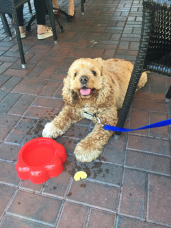 Dog hanging out at restaurant