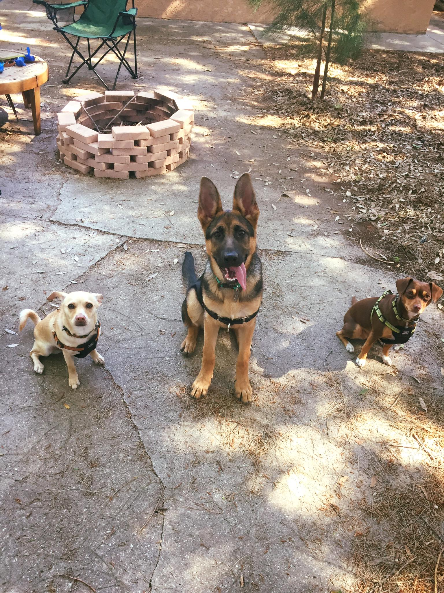 dog training in st pete florida all breeds