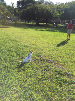 puppy training crescent lake