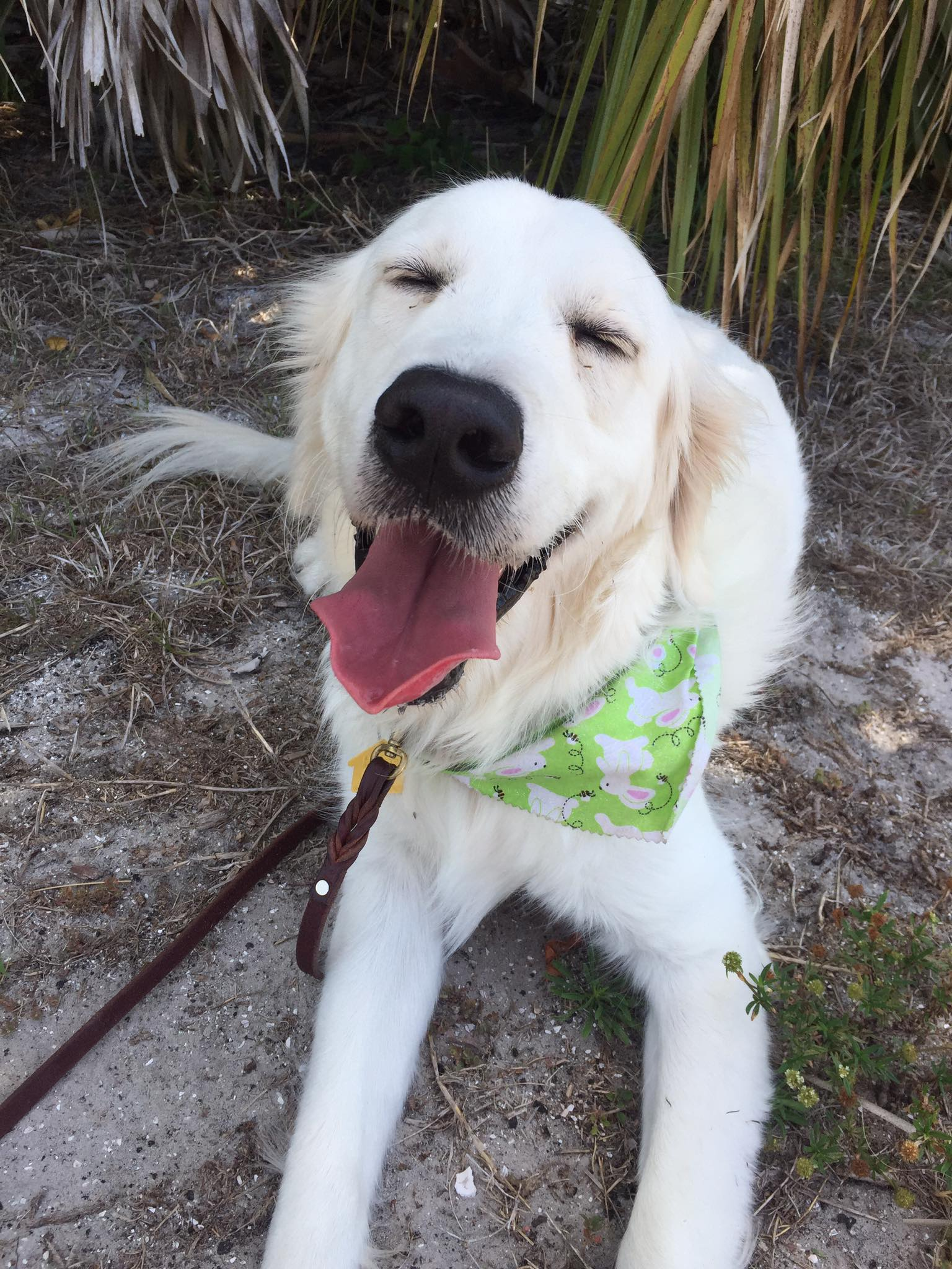 therapy dog training st pete