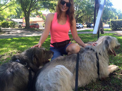 Wolfhounds with their dog trainer