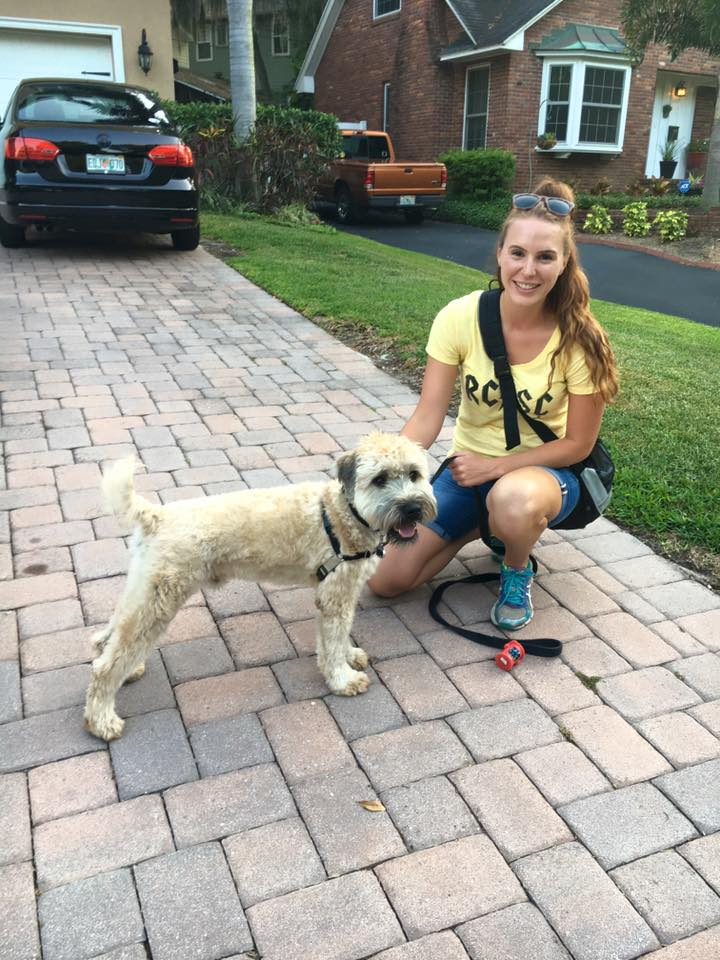 Wheaton Terrier and Dog Trainer