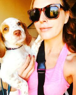 Lola the Brittany Spaniel
