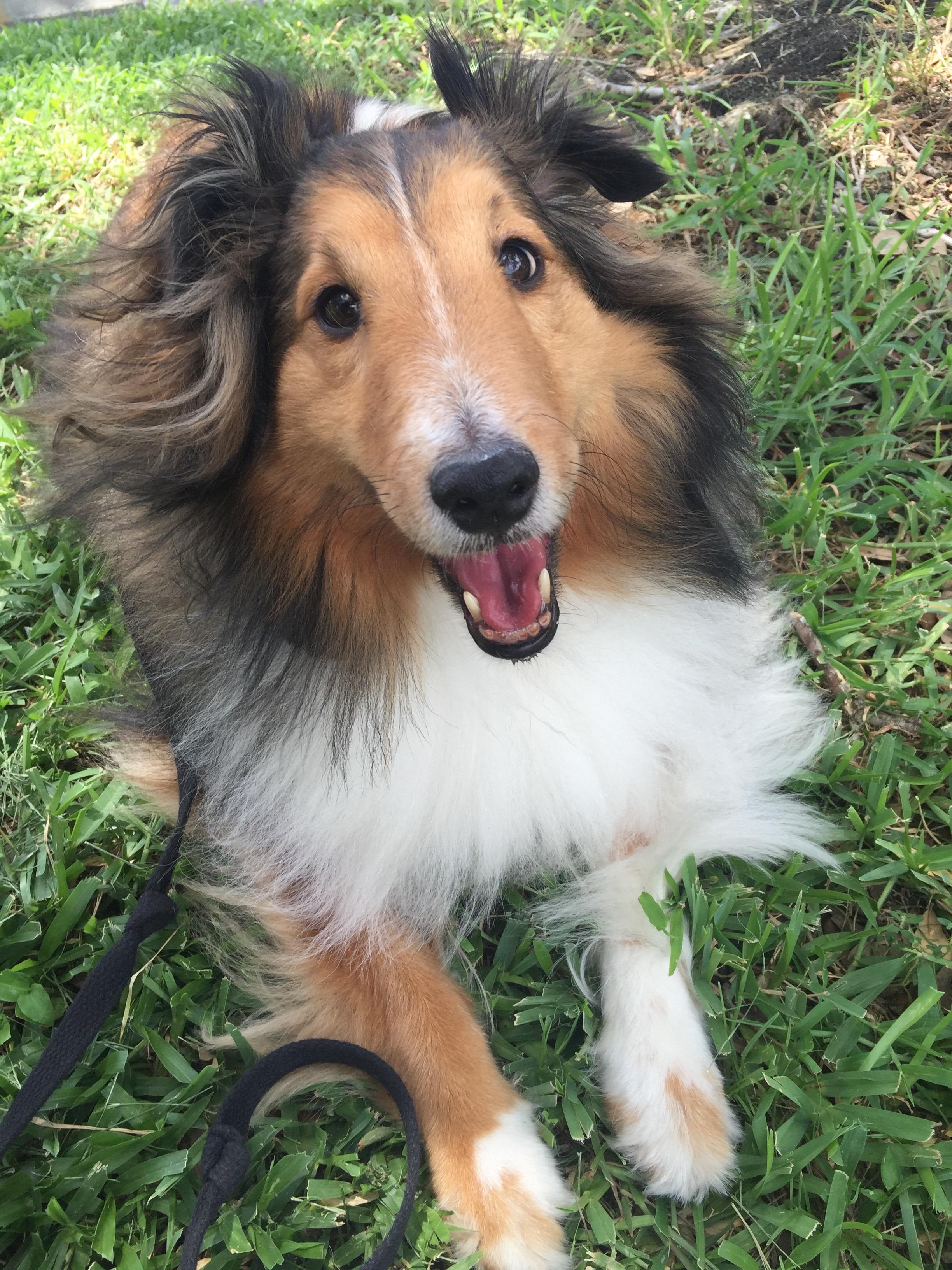 dog walking in Tampa Bay