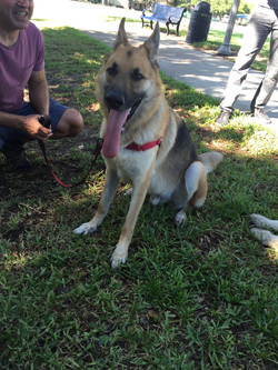 Dog training Pinellas County