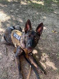 Service dog 4.jpg