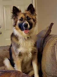 Service dog 2.jpg