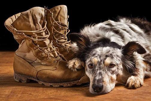 War Hawk Dog and Boots.jpg