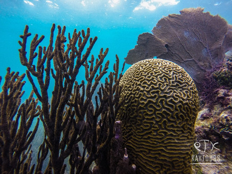 The Coral Reefs We Love and How to Protect Them