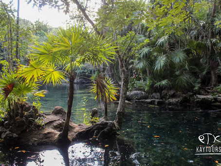 The Top 5 Cenotes in Riviera Maya