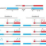 Trapnell_Nat_Biotech_2013.jpg