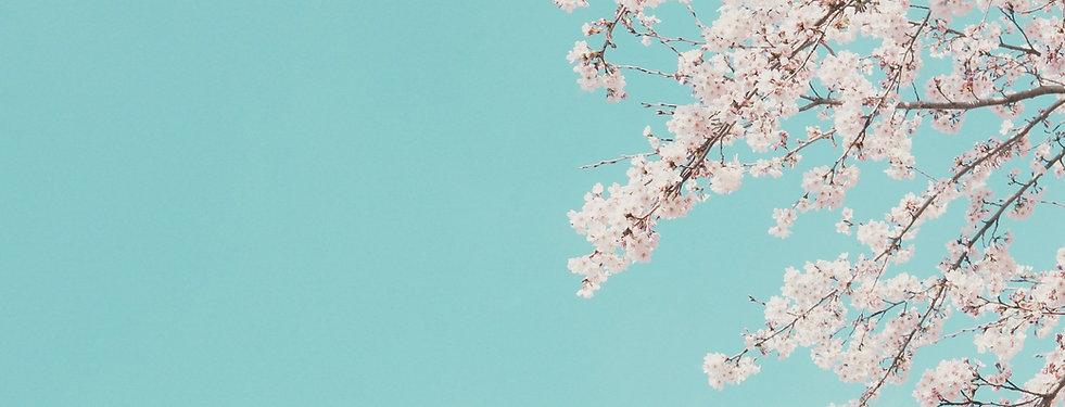 Min's Salon Image cozy, beautiful cherry blossom