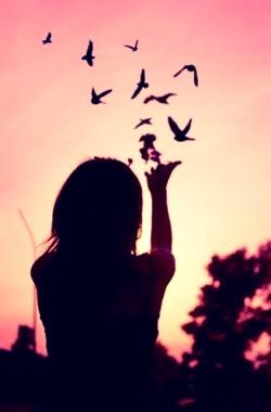 liberté-oiseau.png