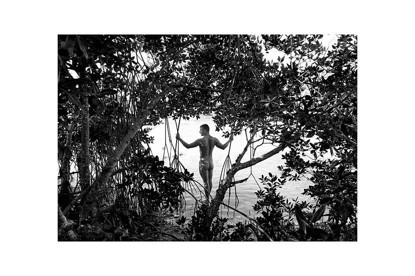 Mangrove Meditation