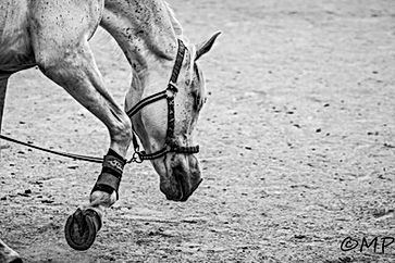 Centre equestre grabels