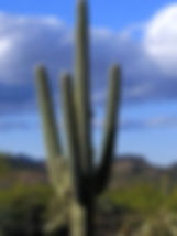 Paul%20Frankenstein_Saguaro_edited_edite