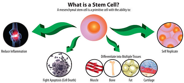 stem cell diagram, stem cell therapy, stem cell therapy at performance rehabilitation in st louis, dr ravi yadava