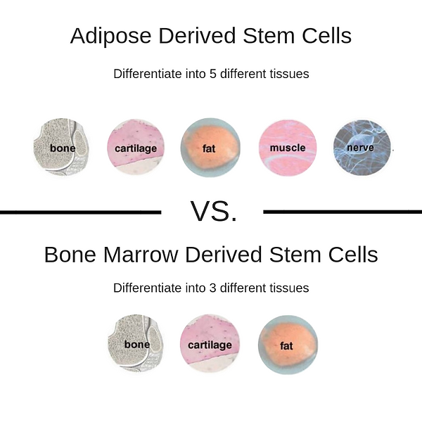 Adipose Derived Stem Cells.png