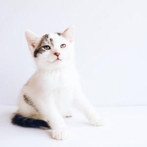 CatFlax Case Study