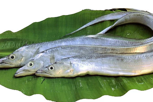3005 Ribbon Fish