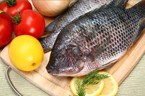 3022C Tilapia Fish