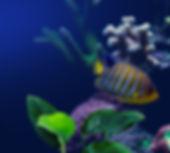 Pesci in acquario
