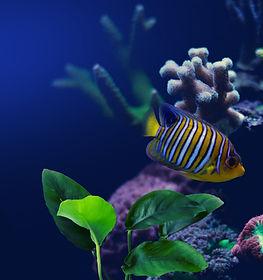 水族館で魚