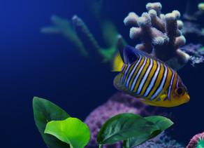 The Israel Aquarium, Jerusalem
