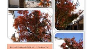 紅葉がきれいです!
