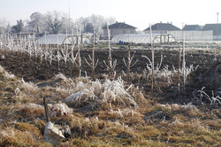 hivers jardins en-chantants 2015