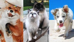Meet Instagram's Most Famous Pets