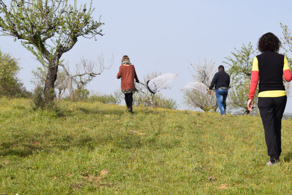 Mediterranean Ecosystems - sampling insect pollinators and wild bee diversity