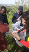 Mediterranean Ecosystems - sampling insect pollinators