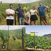 douro vineyards.jpg