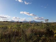 Gorongosa work (15).jpeg